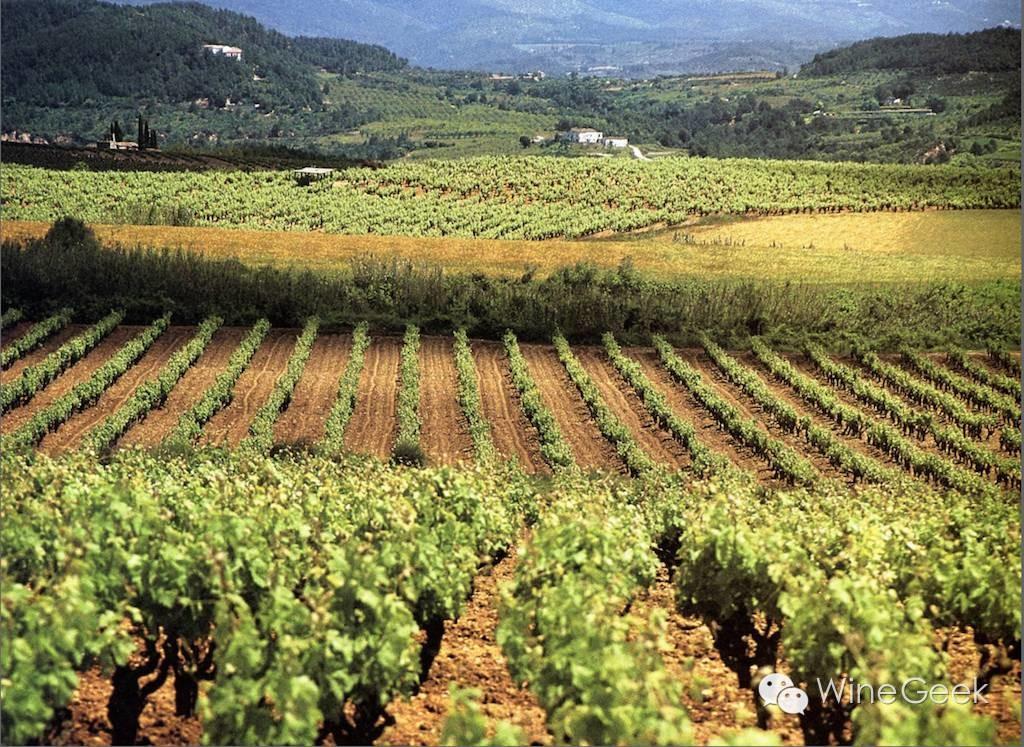 西班牙Cava DO新增单一园级别