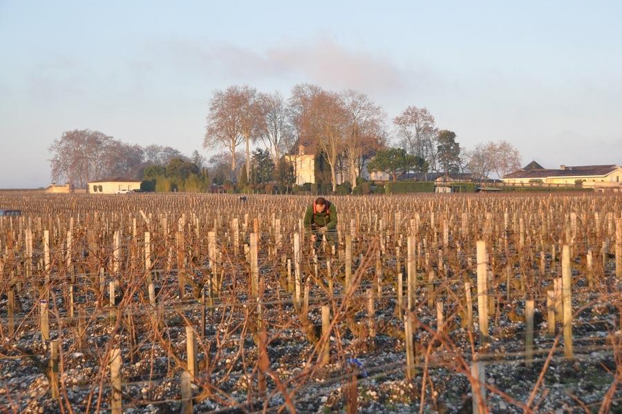 列级庄 深入波尔多列级名庄:朗丽湖城堡 Château