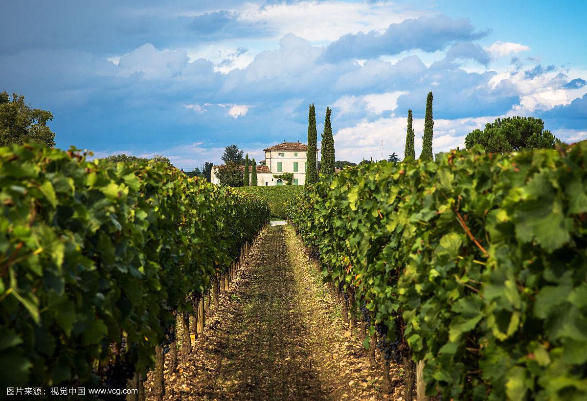 酒庄(Chateau)指一个陆地单位,通常归土地占有者所有葡