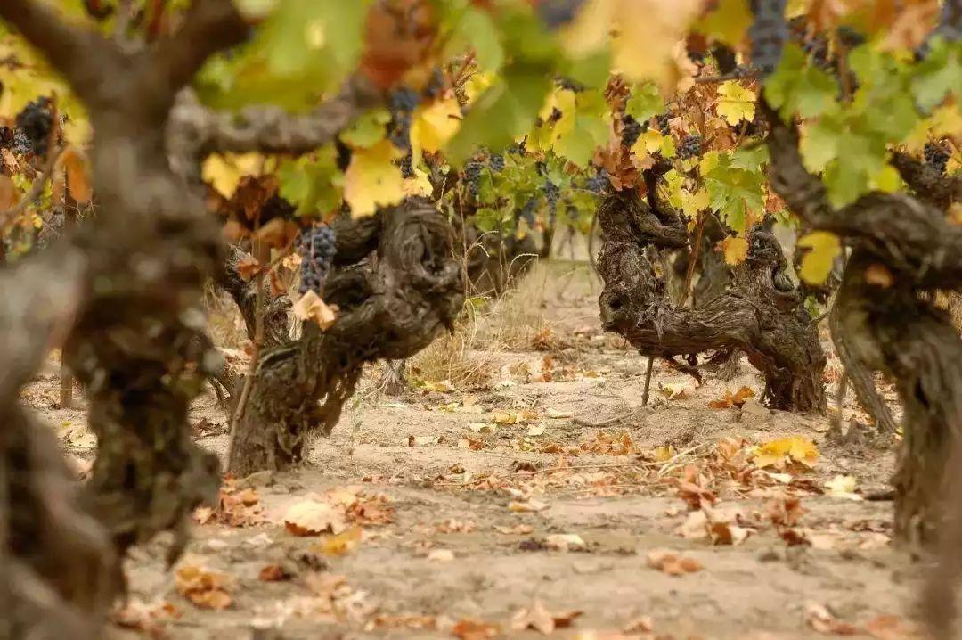 单一品种和混酿的葡萄酒,究竟哪种更好喝